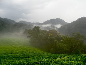 Nature and Nation in Rwanda