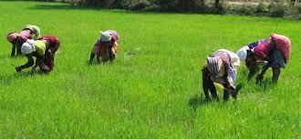 Peasant Women on a farm somewhere in nigeria