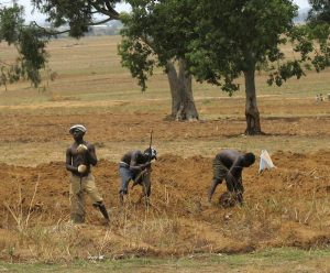 Some Farmers @ Work in the middle belt area of Nigeria1