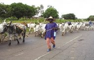 Benue State Government Challenge Critics of Its Anti-Open Grazing Law