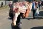 A Portrait As South Africa Boils Again